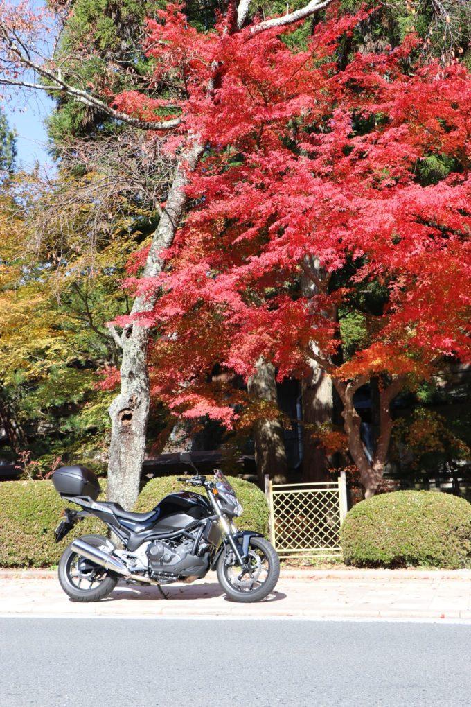 高野山 紅葉