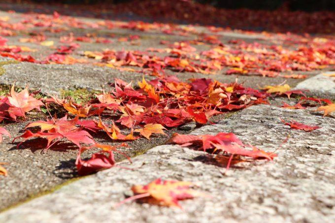奥之院 紅葉